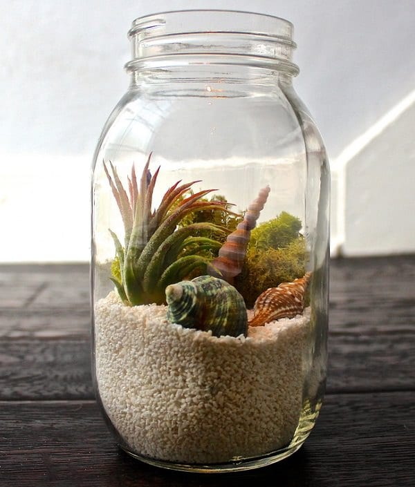 A Clear Gl Bottle Can Be Employed As Planter To Show The Air Plants Embellish It With Sea Shells And Conches Other Items Make Look