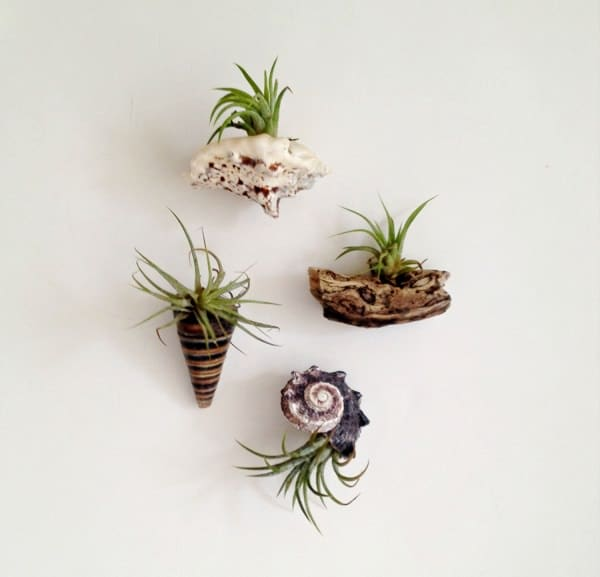 Little Log Rounds Mounted On A Wall Bring Out Unique Tone This Works Great For Smaller Air Plants Ger Logs Can Be Used To Accommodate