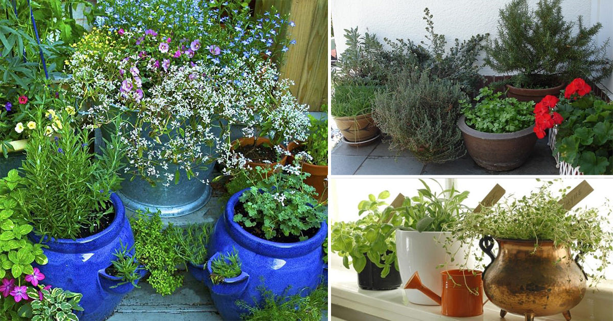 Ten Top Tips For Small Shady Urban Gardens: 7 Essential Container Herb Garden Tips: Growing Herbs In