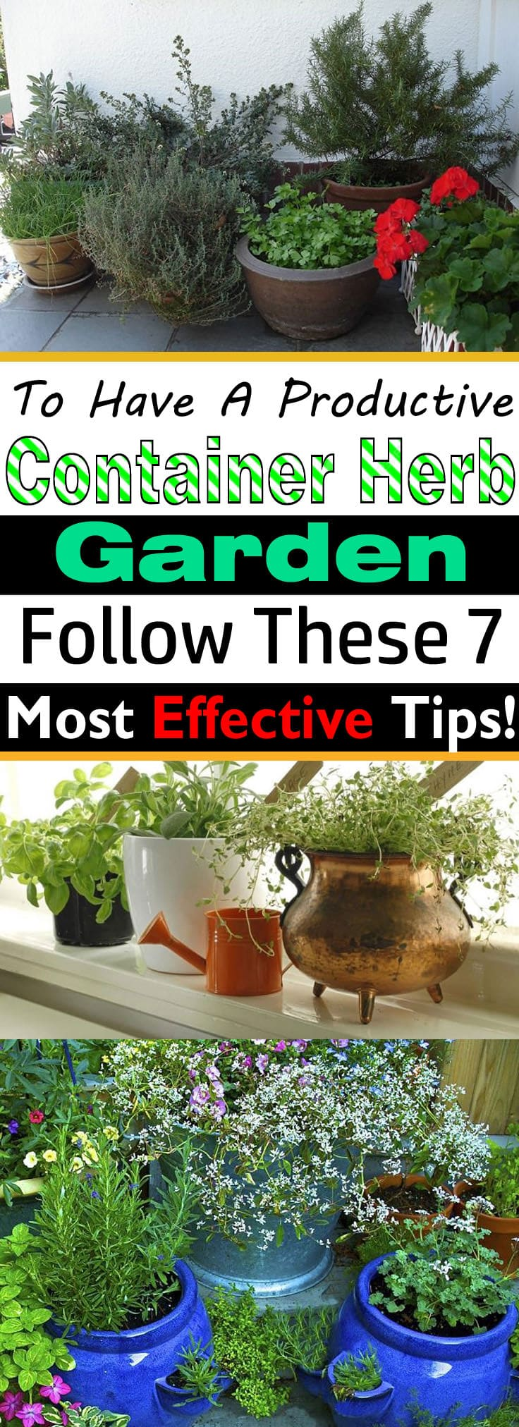 If you're growing herbs in pots, must follow these herb gardening tips!