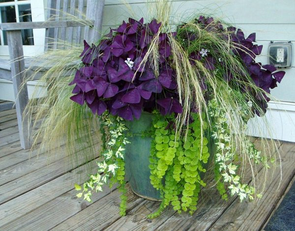14 Great Fall Flowers For Containers Fall Flowers For
