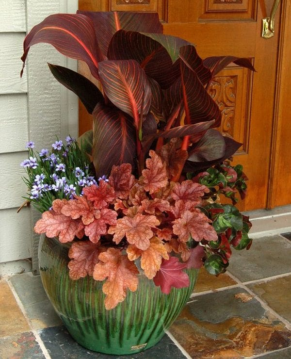 Fall Flowers for Containers 15