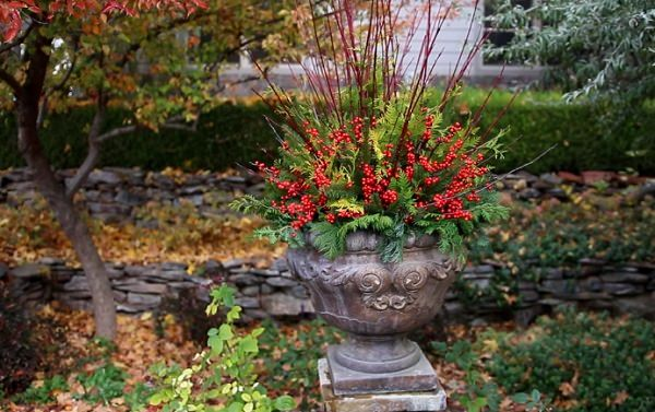 30 Plant Combination Ideas for Container Gardens