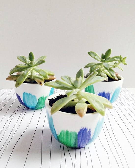 How to Plant Succulents in Pots without Drainage Holes at home without any difficulty