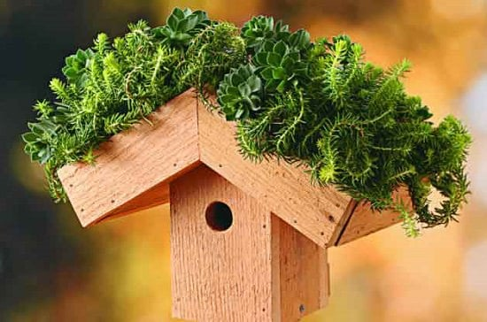 DIY Green Roof Birdhouse