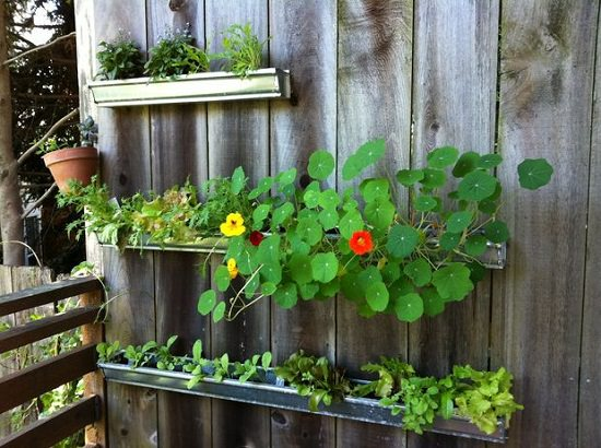 Vertical DIY Rain Gutter Garden Ideas For Small Space