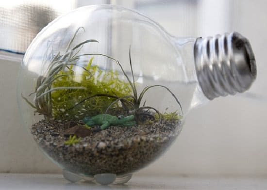 Tiny Light Bulb Terrarium idea