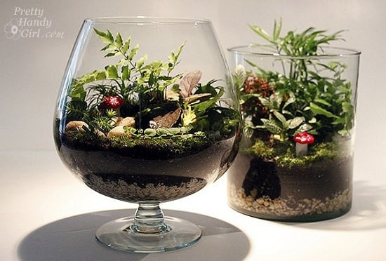 Glass Container DIY Terrarium Ideas