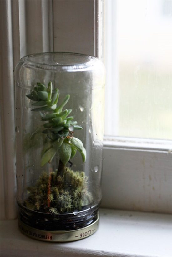 Jam Jar Terrarium ideas diy