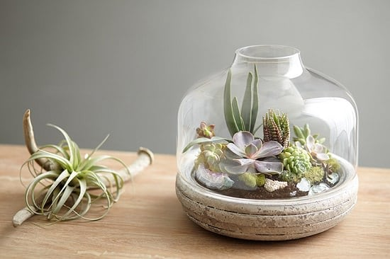 Mini Landscape Terrarium idea