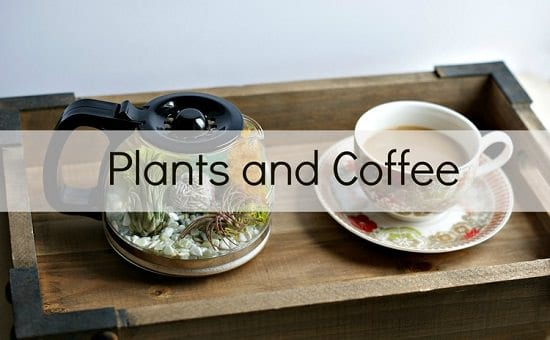 Coffee Pot Terrarium Ideas