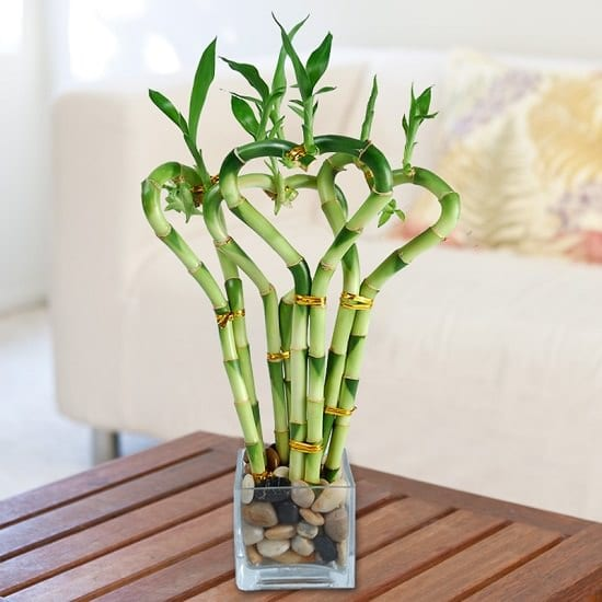 Check out these Lucky Bamboo Care Tips to learn how to grow this low care houseplant. It's perfect for your office desk, kitchen counter or as a table centerpiece!