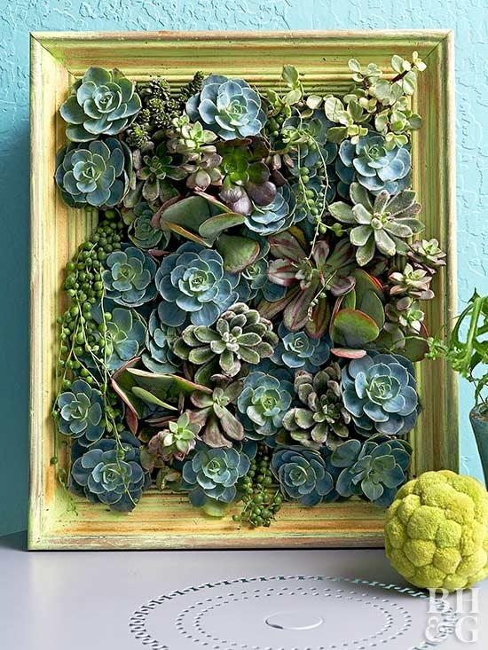 DIY Picture Frame Ideas for gardeners