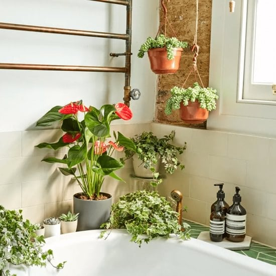 Bathroom Garden DIY