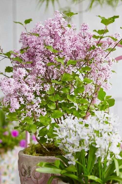 Most Fragrant Flowers According to Gardeners 6