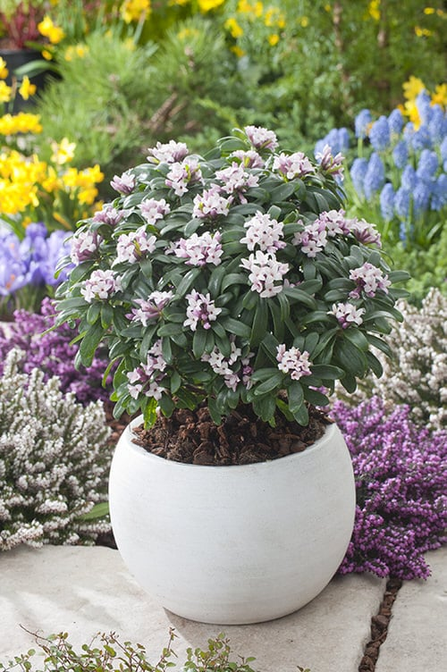 Most Fragrant Flowers According to Gardeners 7