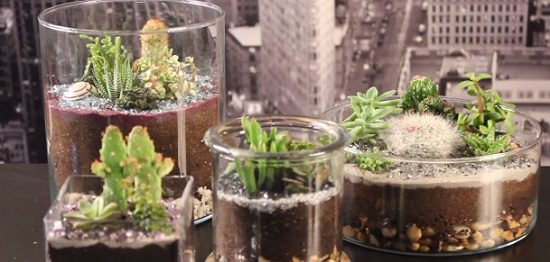 7 Steps To Make A Totally Adorable Diy Desert Terrarium Balcony