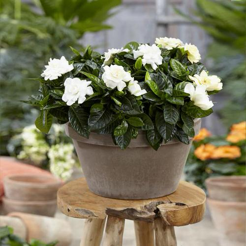 Most Fragrant Flowers According to Gardeners 13