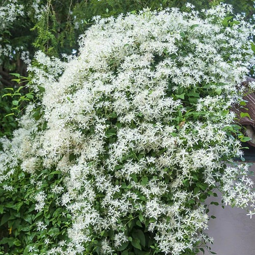 Most Fragrant Flowers According to Gardeners 2