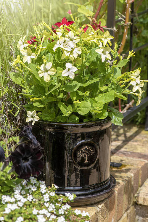 Most Fragrant Flowers According to Gardeners 3