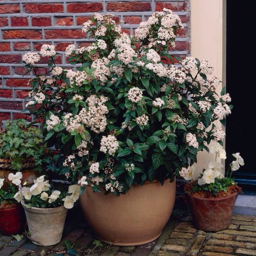 Most Fragrant Flowers According to Gardeners 4