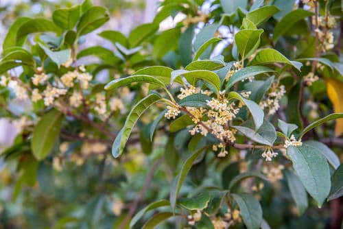 Most Fragrant Flowers According to Gardeners 5
