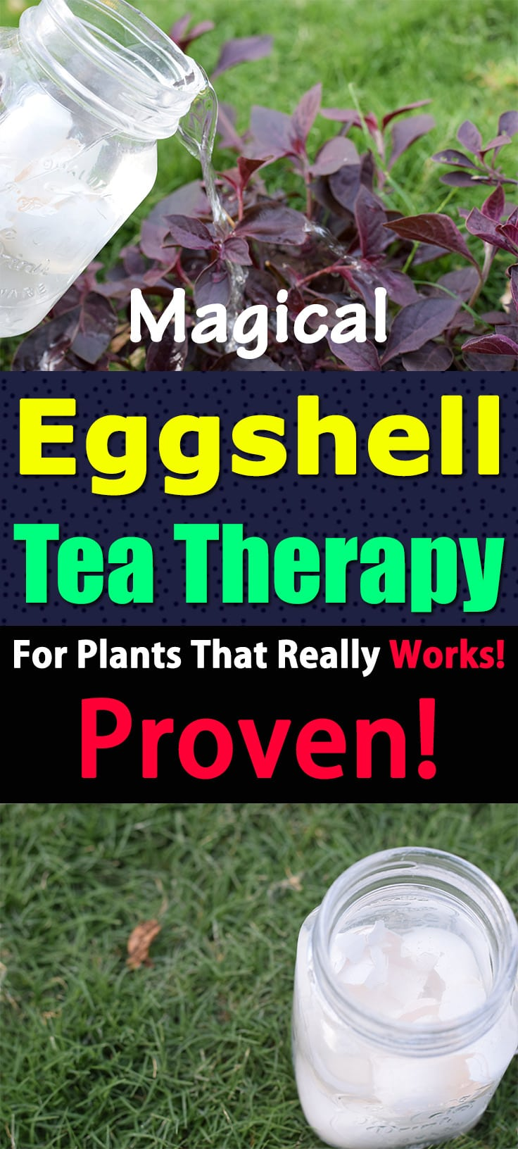 This eggshell tea recipe for plants is proven in the lab test. It works! Learn everything about it in this informative article.