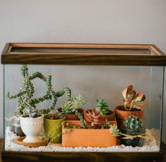 DIY Terrarium from Old Fish Tank
