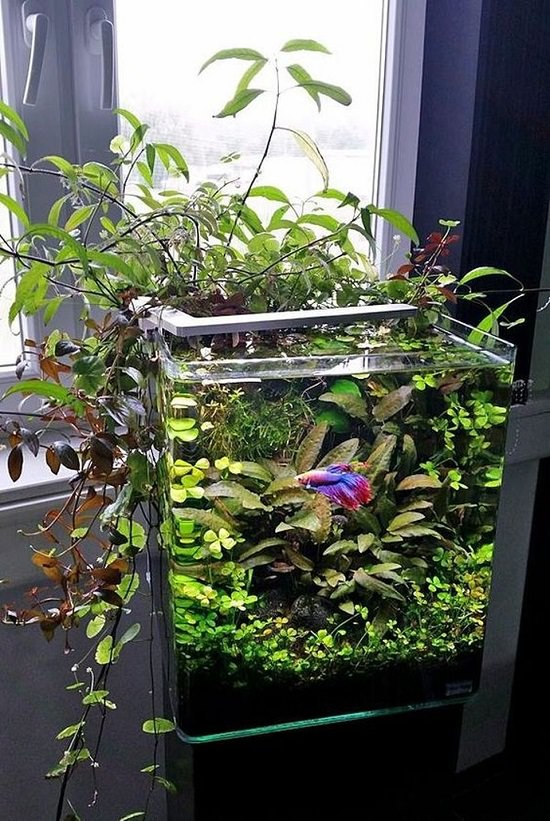 Diy Fish Tank Planter9 Balcony Garden Web