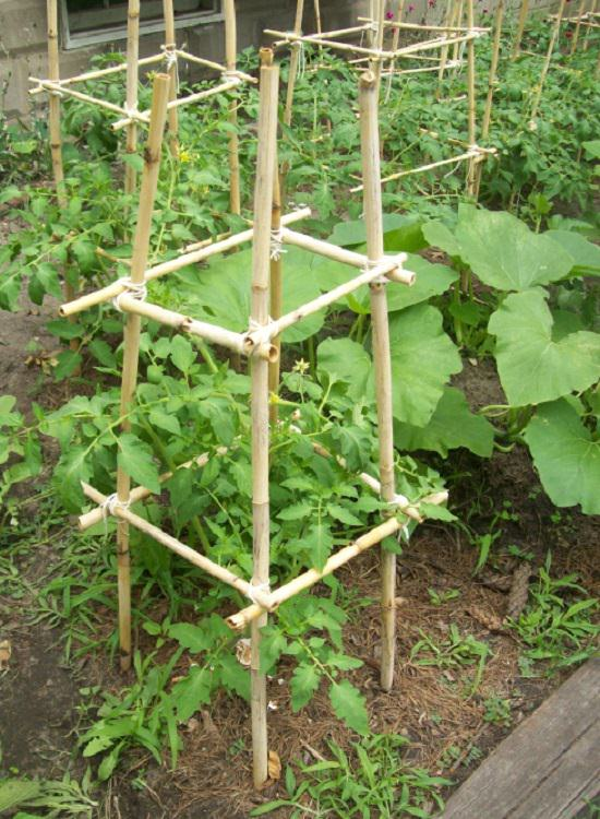 DIY Tomato Cage And Stake Ideas