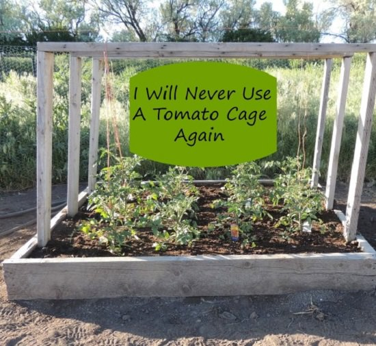 Raised Bed+Tomato Plants Support Structure