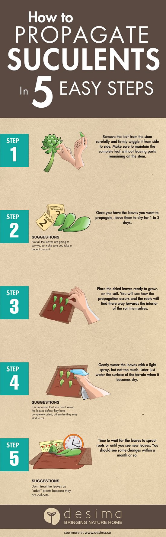 Everything About Growing Succulents in 8 Infographics