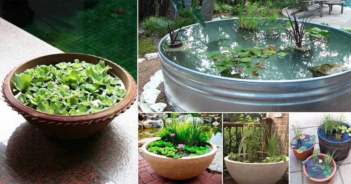 Diy Container Water Garden Ideas