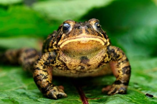 Attract Frogs To The Garden