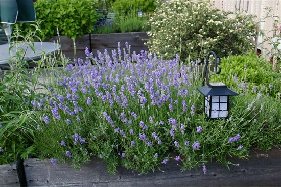 Clever Ways To Use Spices In The Garden 9