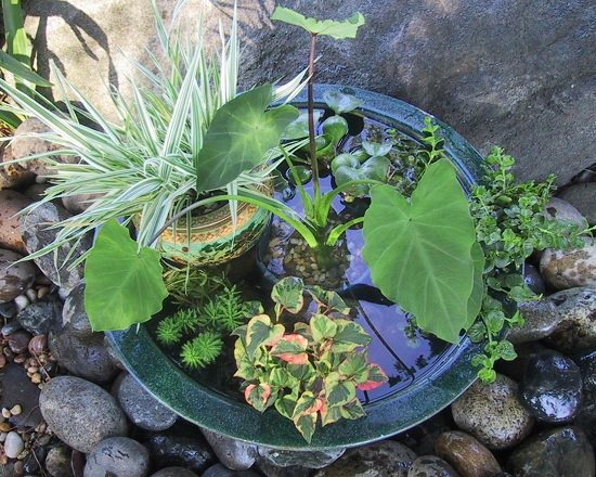 Soothing Container Water Pond