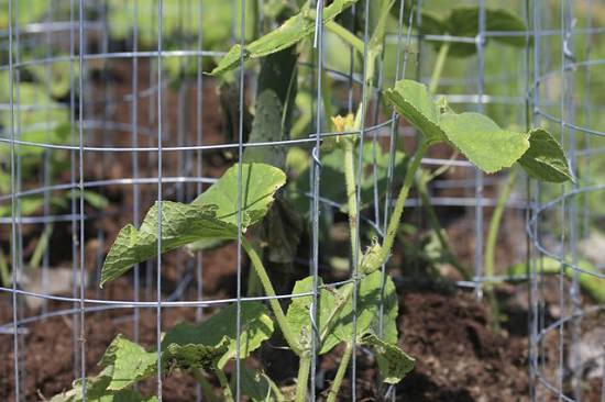 11 Functional Diy Cucumber Trellis Ideas Balcony Garden Web