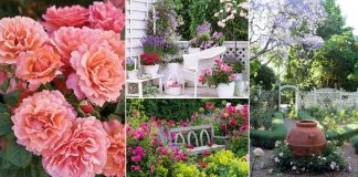 If you're planning to create a rose garden, these 11 informative articles in this post will help you!