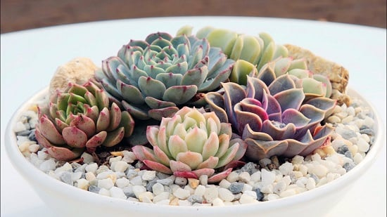 Best Succulents For Beginners 2