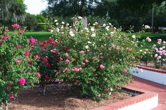 11 Articles That Teach You How To Create A Rose Garden ...