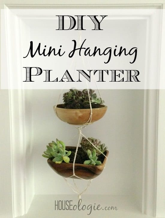 Overly Cute DIY Mini Planters for Succulents to make them stand out