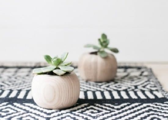 Overly Cute DIY Mini Planters for Succulents for indoor garden