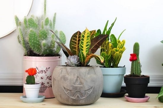 halloween planter diy