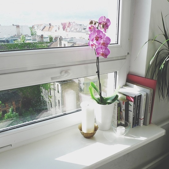 Orchid Care Tips you must follow