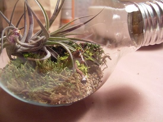 Tiny Light Bulb Terrarium