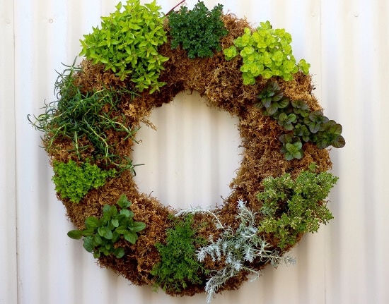 How to Make a Living Herb Wreath