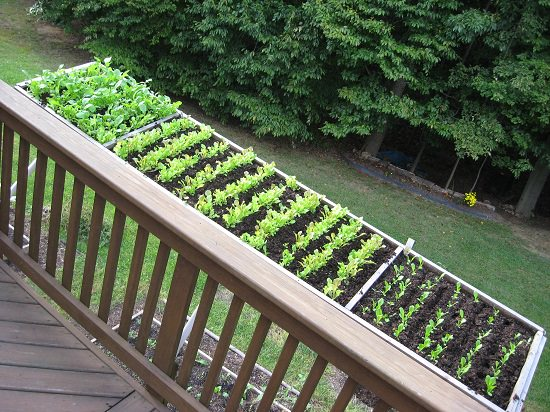 unique salad garden on deck