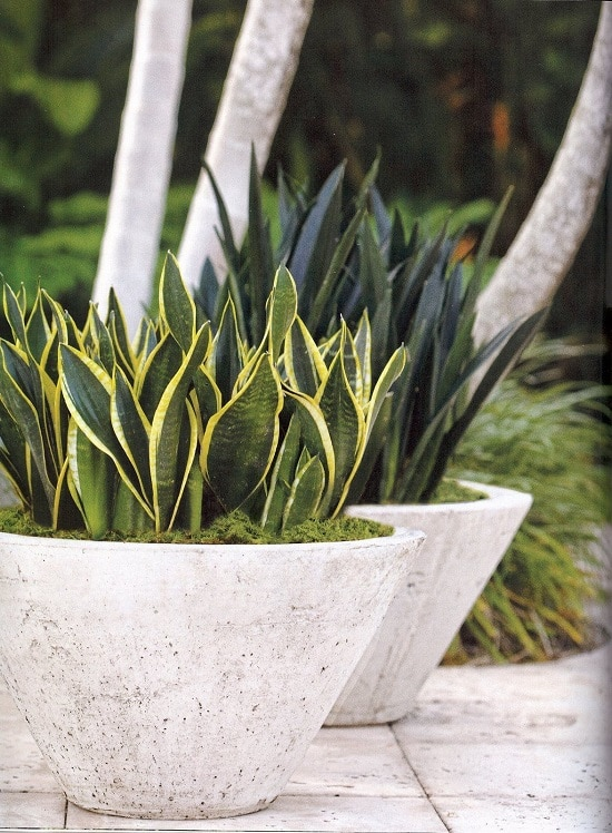 Natural Snake Repellent Plants for your garden