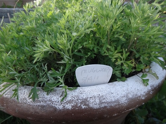 Natural Snake Repellent Plants you can grow easily