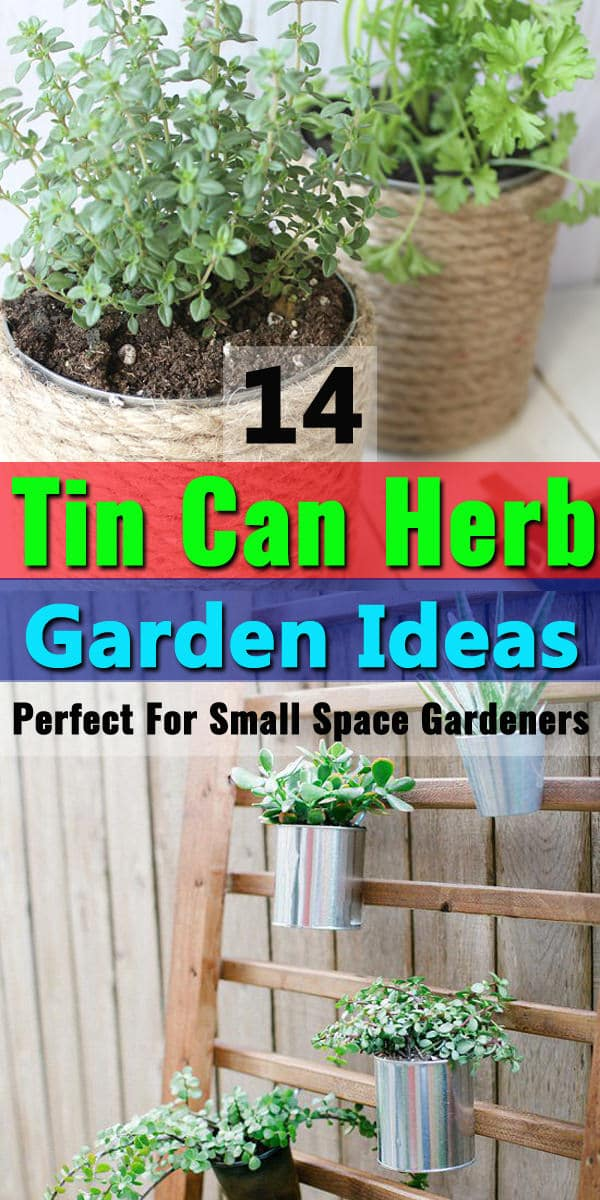14 Tin Can Herb Garden Ideas Perfect For Small Space Gardeners